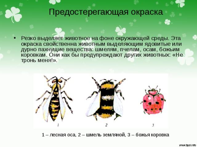 Предостерегающая окраска Резко выделяет животное на фоне окружающей среды. Эта окраска свойственна животным выделяющим ядовитые или дурно пахнущие вещества: шмелям, пчелам, осам, божьим коровкам. Они как бы предупреждают других животных: «Не тронь меня!». 1 – лесная оса, 2 – шмель земляной, 3 – божья коровка