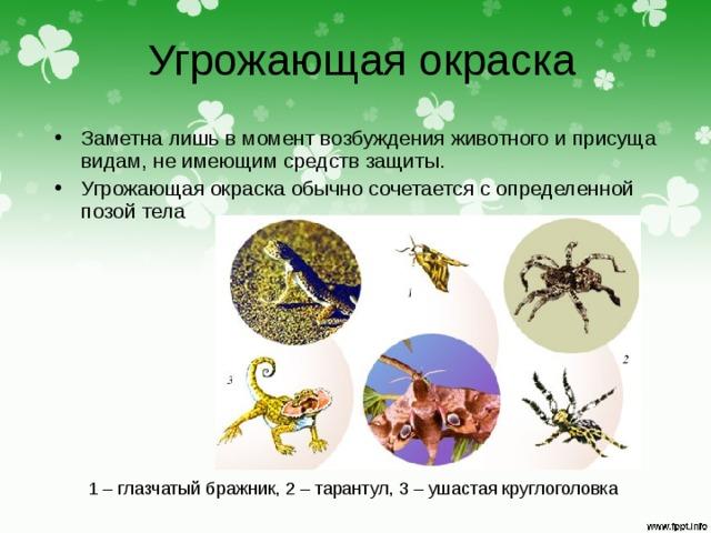 Угрожающая окраска Заметна лишь в момент возбуждения животного и присуща видам, не имеющим средств защиты. Угрожающая окраска обычно сочетается с определенной позой тела 1 – глазчатый бражник, 2 – тарантул, 3 – ушастая круглоголовка