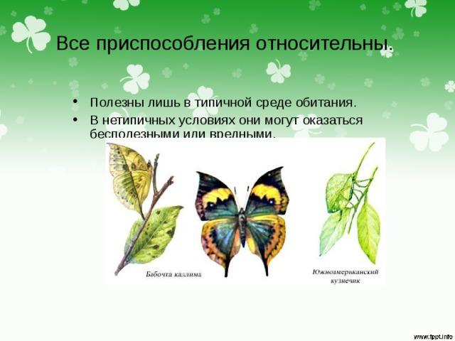 Все приспособления относительны. Полезны лишь в типичной среде обитания. В нетипичных условиях они могут оказаться бесполезными или вредными.