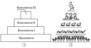Решение задач по экологическим пирамидам задачи на ускорение с решением 10 класс