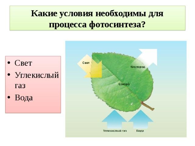Что такое фотосинтез условия необходимые для него