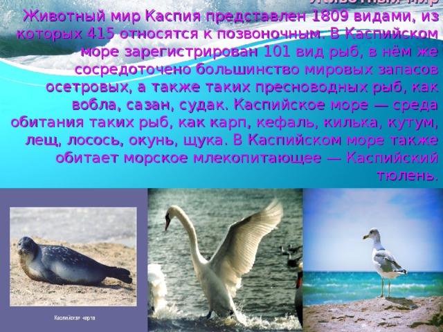 Животный мир  Животный мир Каспия представлен 1809 видами, из которых 415 относятся к позвоночным. В Каспийском море зарегистрирован 101 вид рыб, в нём же сосредоточено большинство мировых запасов осетровых, а также таких пресноводных рыб, как вобла, сазан, судак. Каспийское море — среда обитания таких рыб, как карп, кефаль, килька, кутум, лещ, лосось, окунь, щука. В Каспийском море также обитает морское млекопитающее — Каспийский тюлень.