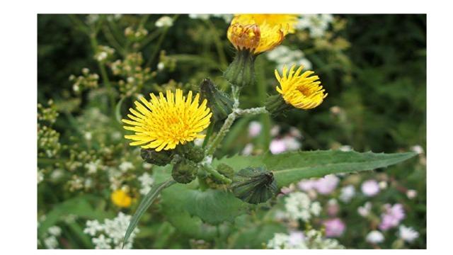фото цветковых растений саратовской области очень нежное