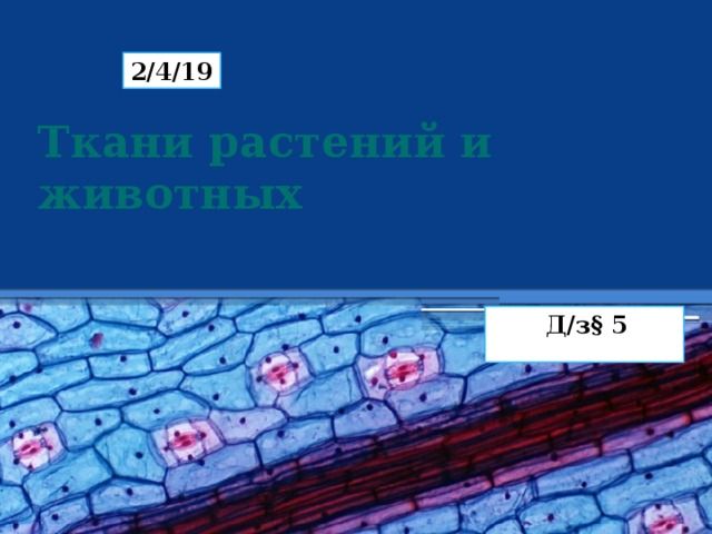 2/4/19 Ткани растений и животных Д/з§ 5