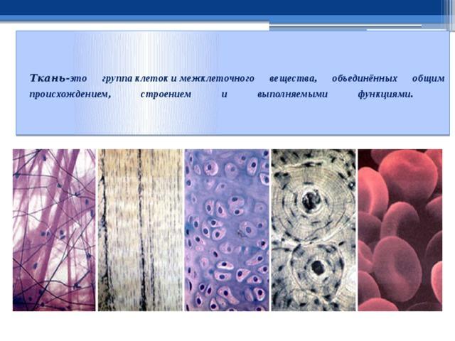Ткань- это группаклетокимежклеточного вещества, объединённых общим происхождением, строением и выполняемыми функциями .
