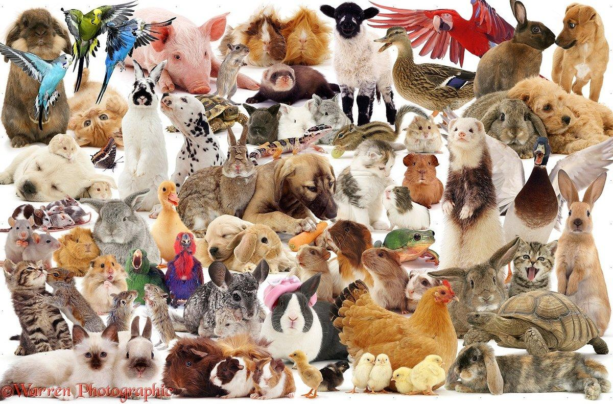 Картинка всех домашних животных