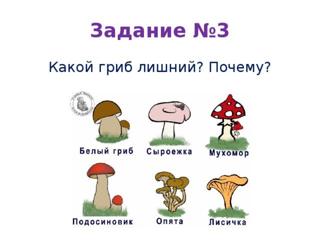 Задание №3 Какой гриб лишний? Почему?