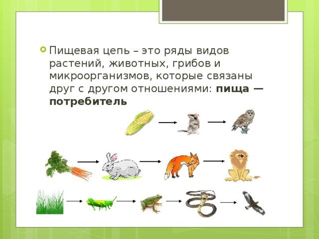 Пищевая цепь – это ряды видов растений, животных, грибов и микроорганизмов, которые связаны друг с другом отношениями: пища — потребитель