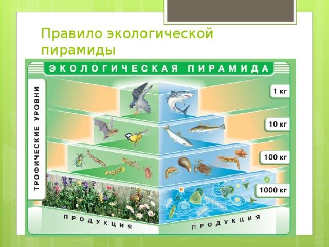 Правило экологической пирамиды