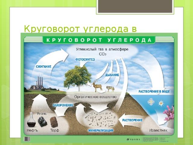 Круговорот углерода в биосфере