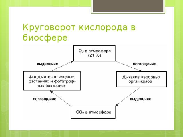 Круговорот кислорода в биосфере
