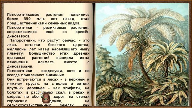 Папоротниковые растения появились более 350 млн. лет назад, став предшественниками семенных видов. Папоротники – реликтовые растения, сохранившиеся ещё со времён динозавров.  Папоротники, что растут сейчас, – это лишь остатки богатого царства, миллионы лет назад населявшего нашу планету. Большинство этих древних красивых растений вымерли из-за изменения климата вместе с динозаврами. Папоротники – вездесущи, хотя и не всегда привлекают внимание. Они встречаются в лесах – в верхнем и нижнем ярусах, на стволах и ветвях крупных деревьев – как эпифиты, на болотах, в расселинах скал, в реках и озёрах, по обочинам дорог, на стенах городских домов, на сельскохозяйственных землях как сорняки.