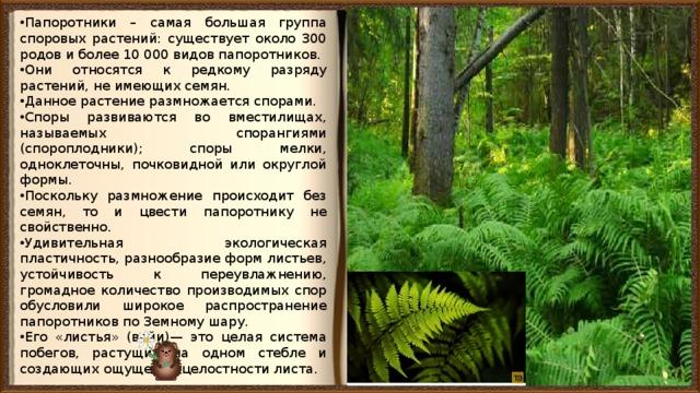 Папоротники – самая большая группа споровых растений: существует около 300 родов и более 10 000 видов папоротников. Они относятся к редкому разряду растений, не имеющих семян. Данное растение размножается спорами. Споры развиваются во вместилищах, называемых спорангиями (спороплодники); споры мелки, одноклеточны, почковидной или округлой формы. Поскольку размножение происходит без семян, то и цвести папоротнику не свойственно. Удивительная экологическая пластичность, разнообразие форм листьев, устойчивость к переувлажнению, громадное количество производимых спор обусловили широкое распространение папоротников по Земному шару. Его «листья» (вайи)— это целая система побегов, растущих на одном стебле и создающих ощущение целостности листа.