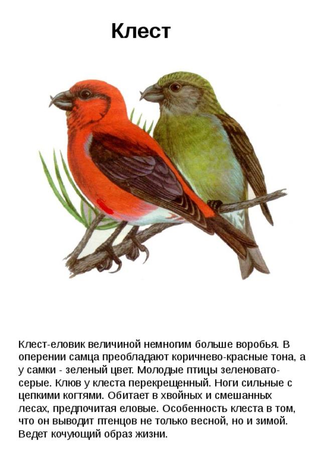 рассказ птичка с картинками как