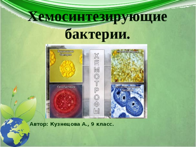 Хемосинтезирующие бактерии. Автор: Кузнецова А., 9 класс.
