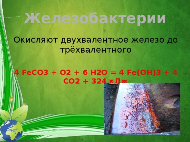 Железобактерии Окисляют двухвалентное железо до трёхвалентного 4 FeCO3 + O2 + 6 H2O = 4 Fe(OH)3 + 4 CO2 + 324 кДж