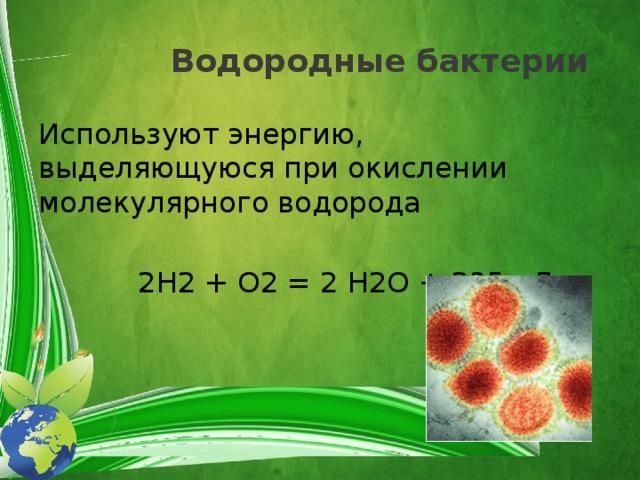 Водородные бактерии Используют энергию, выделяющуюся при окислении молекулярного водорода  2H2 + O2 = 2 H2O + 235 кДж