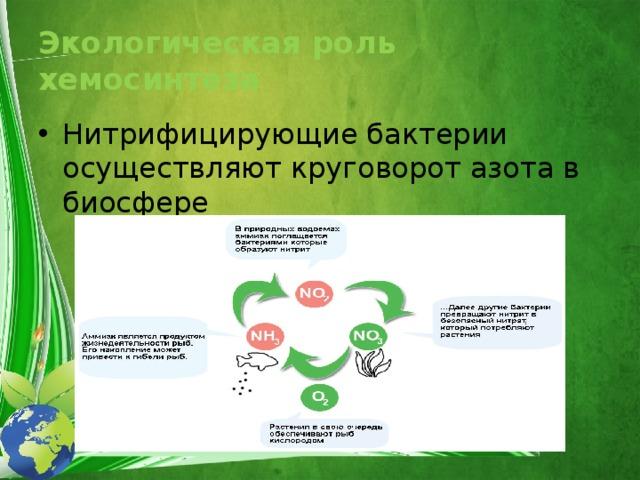 Экологическая роль хемосинтеза Нитрифицирующие бактерии осуществляют круговорот азота в биосфере