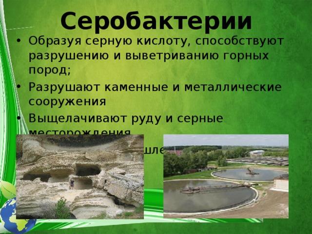 Серобактерии Образуя серную кислоту, способствуют разрушению и выветриванию горных пород; Разрушают каменные и металлические сооружения Выщелачивают руду и серные месторождения Очищение промышленных сточных вод