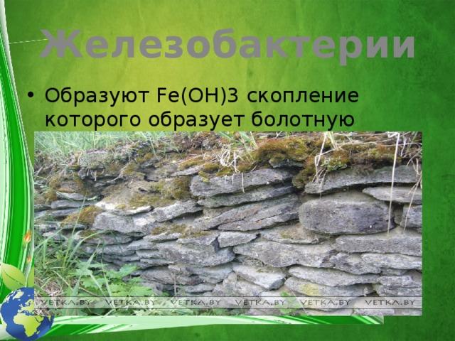 Железобактерии Образуют Fe(OH)3 скопление которого образует болотную железную руду