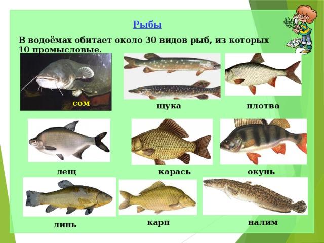 общий картинки рыб которые водятся в водоемах еао часто