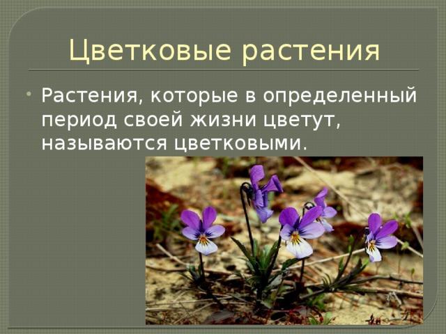 Цветковые растения Растения, которые в определенный период своей жизни цветут, называются цветковыми.