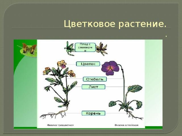 Цветковое растение.  .