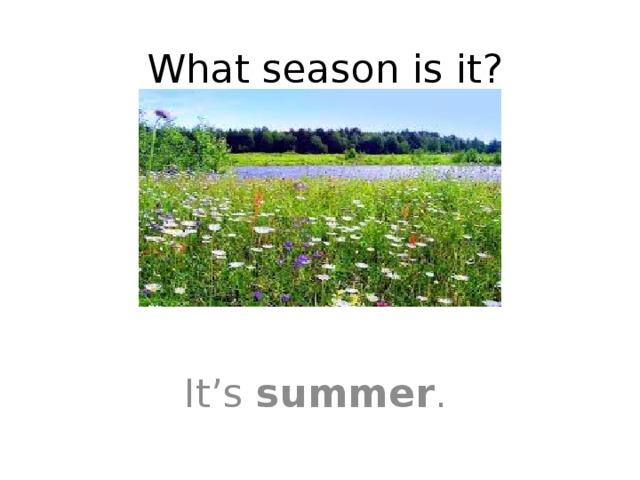 What season is it? It's summer .
