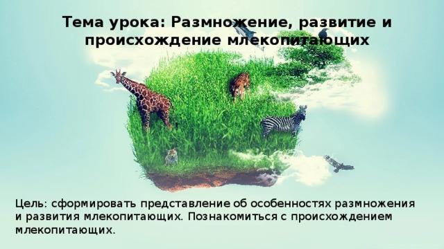 Тема урока: Размножение, развитие и происхождение млекопитающих Цель: сформировать представление об особенностях размножения и развития млекопитающих. Познакомиться с происхождением млекопитающих.