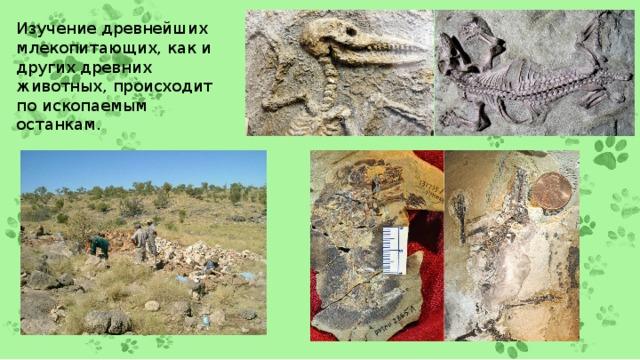 Изучение древнейших млекопитающих, как и других древних животных, происходит по ископаемым останкам.