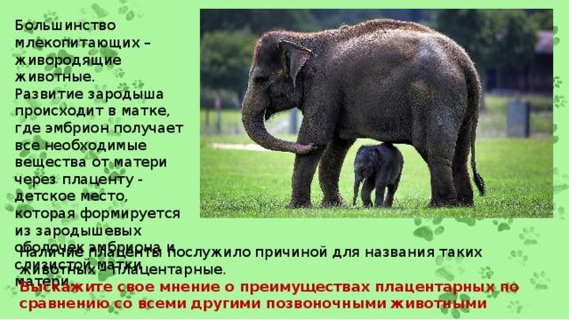Большинство млекопитающих – живородящие животные. Развитие зародыша происходит в матке, где эмбрион получает все необходимые вещества от матери через плаценту - детское место, которая формируется из зародышевых оболочек эмбриона и слизистой матки матери. Наличие плаценты послужило причиной для названия таких животных – плацентарные. Выскажите свое мнение о преимуществах плацентарных по сравнению со всеми другими позвоночными животными