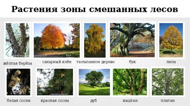 есть картинки растения смешанных лесов хотела съесть