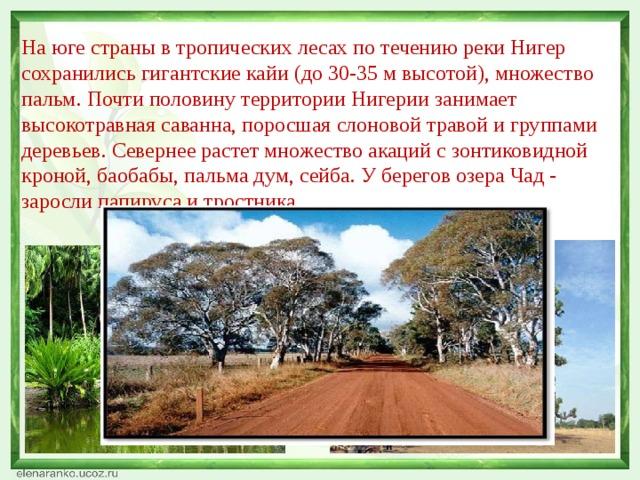 На юге страны в тропических лесах по течению реки Нигер сохранились гигантские кайи (до 30-35 м высотой), множество пальм. Почти половину территории Нигерии занимает высокотравная саванна, поросшая слоновой травой и группами деревьев. Севернее растет множество акаций с зонтиковидной кроной, баобабы, пальма дум, сейба. У берегов озера Чад - заросли папируса и тростника.