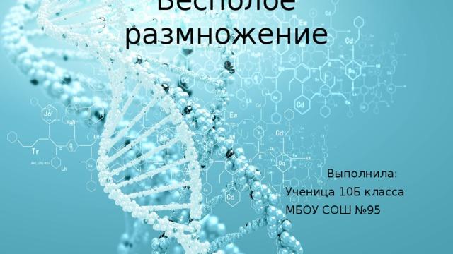 Бесполое размножение Выполнила: Ученица 10Б класса МБОУ СОШ №95