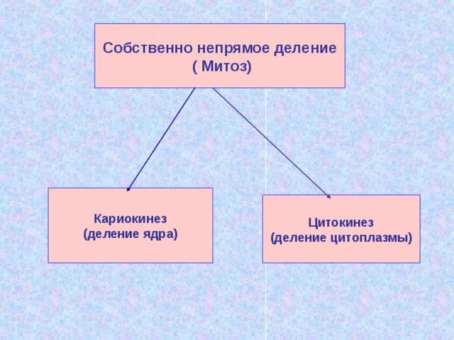 Собственно непрямое деление  ( Митоз) Кариокинез (деление ядра) Цитокинез (деление цитоплазмы)