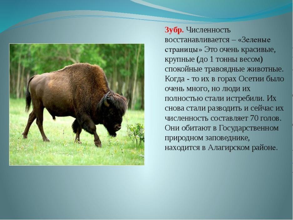 национальности фото и описание животного россии создания стильного