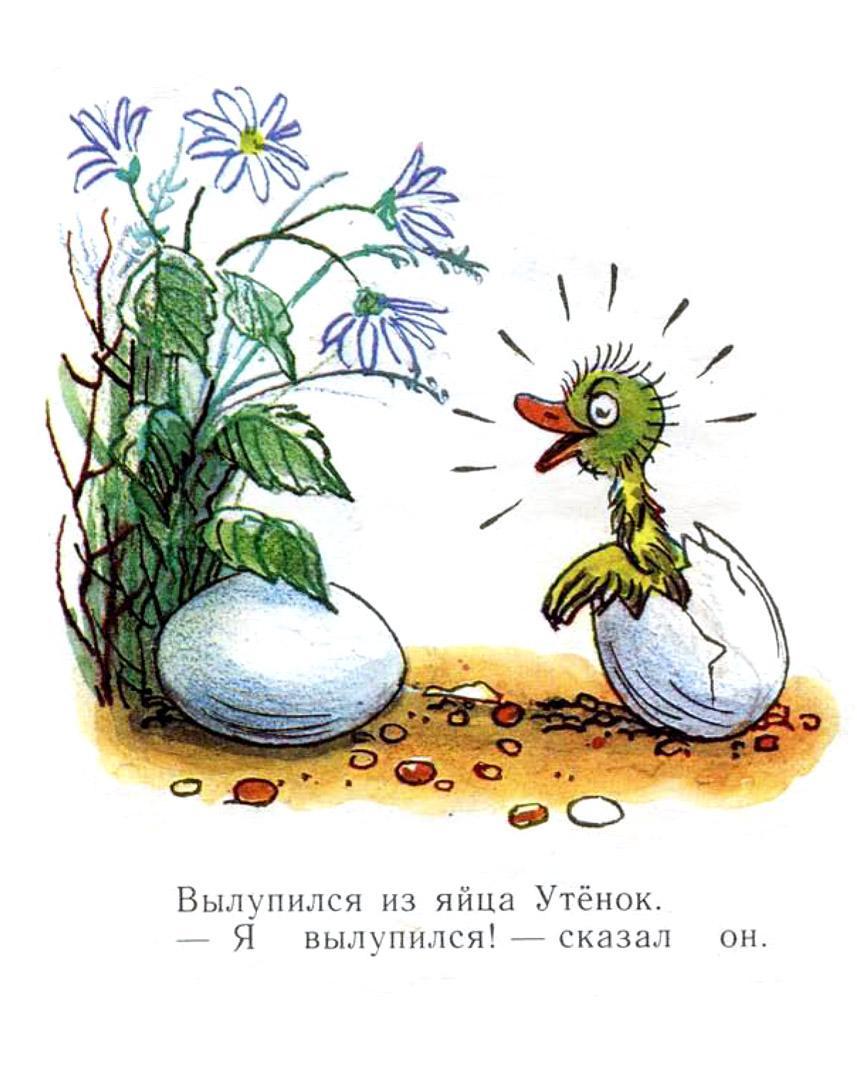иллюстрации к сказке сутеева утенок и цыпленок вся