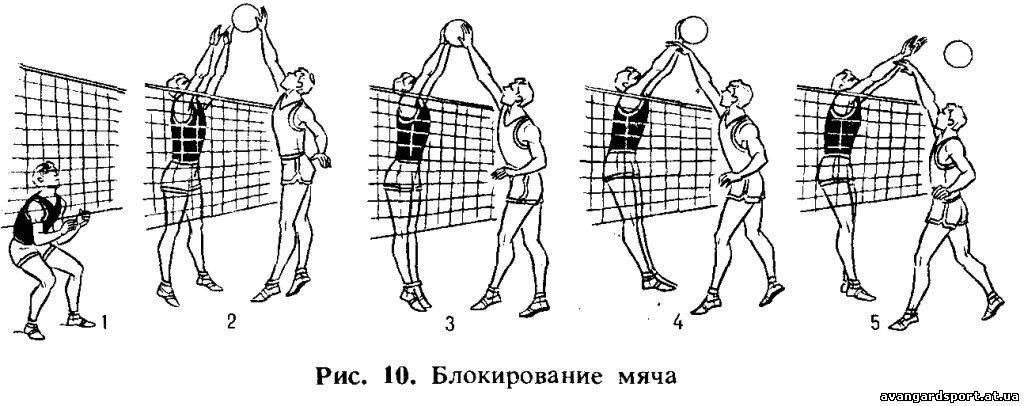 самом техника волейбола в картинках даже