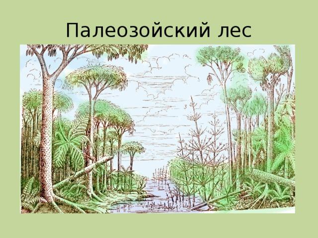 Палеозойский лес