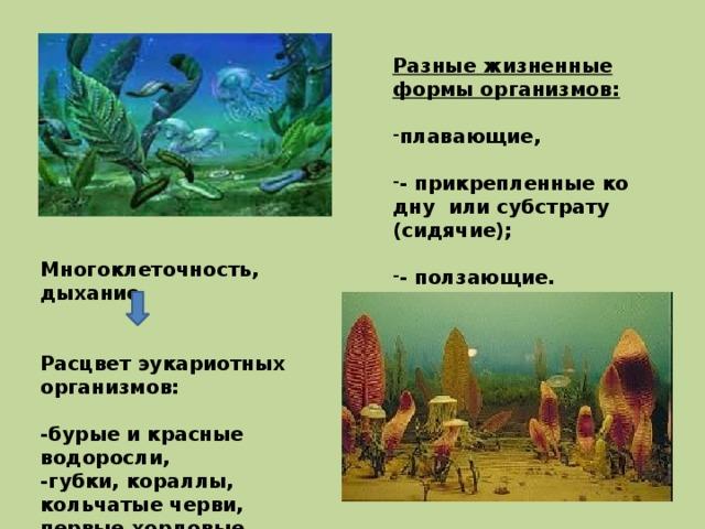 Разные жизненные формы организмов:  плавающие,  - прикрепленные ко дну или субстрату (сидячие);  - ползающие. Многоклеточность, дыхание   Расцвет эукариотных организмов:  -бурые и красные водоросли, -губки, кораллы, кольчатые черви, первые хордовые животные – бесчерепные.