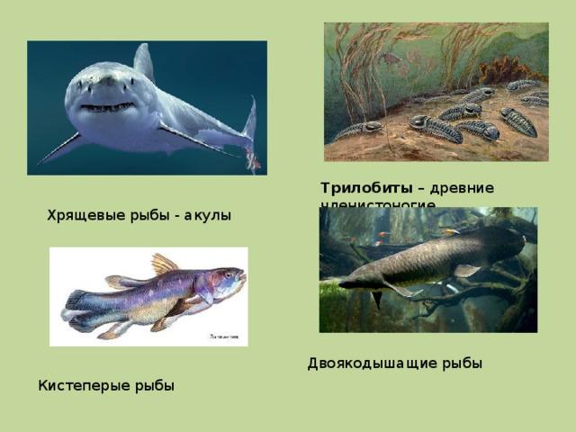 Трилобиты – древние членистоногие Хрящевые рыбы - акулы Двоякодышащие рыбы Кистеперые рыбы