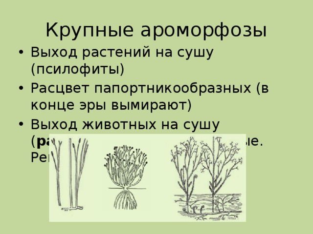 Крупные ароморфозы Выход растений на сушу (псилофиты) Расцвет папортникообразных (в конце эры вымирают) Выход животных на сушу ( ракоскорпионы – насекомые. Рептилии)