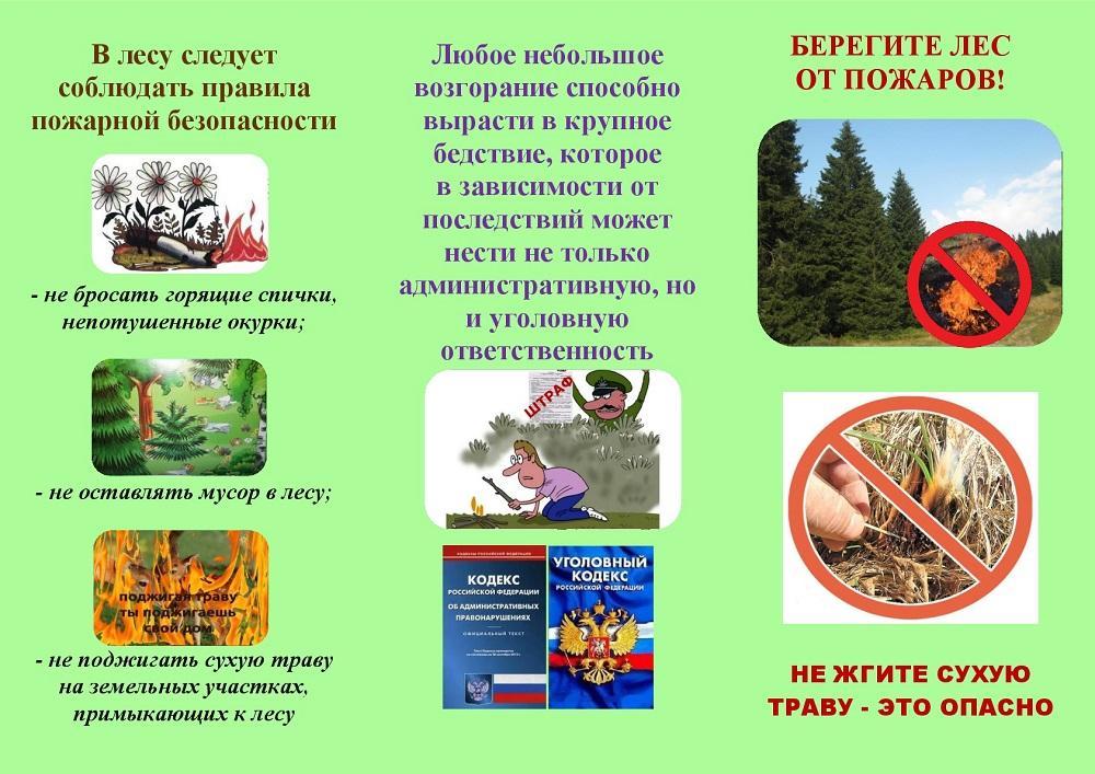 Лес буклеты картинки