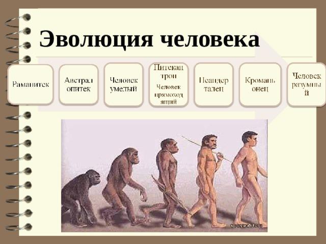 эволюционная цепочка человека картинка тобой