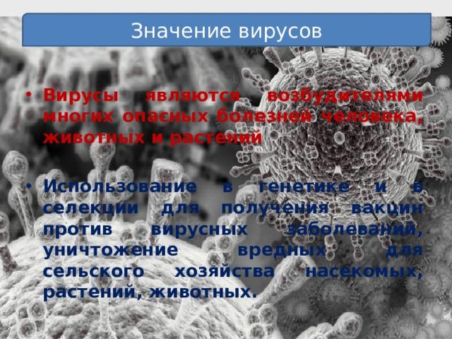 Значение вирусов  Вирусы являются возбудителями многих опасных болезней человека, животных и растений  Использование в генетике и в селекции для получения вакцин против вирусных заболеваний, уничтожение вредных для сельского хозяйства насекомых, растений, животных.