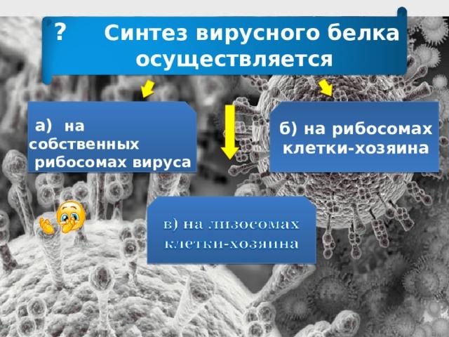 ? Синтез вирусного белка  осуществляется  а) на собственных  рибосомах вируса б) на рибосомах клетки-хозяина