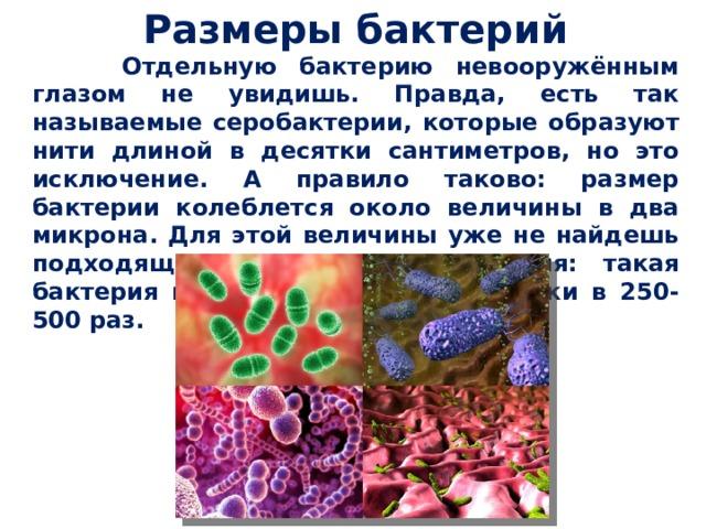 Размеры бактерий  Отдельную бактерию невооружённым глазом не увидишь. Правда, есть так называемые серобактерии, которые образуют нити длиной в десятки сантиметров, но это исключение. А правило таково: размер бактерии колеблется около величины в два микрона. Для этой величины уже не найдешь подходящего наглядного сравнения: такая бактерия меньше типографской точки в 250-500 раз.
