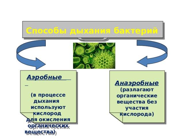 Способы дыхания бактерий  Аэробные   (в процессе дыхания используют кислород для окисления органических вещества)  Анаэробные (разлагают органические вещества без участия кислорода)