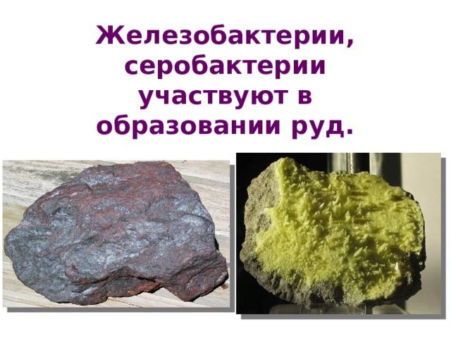Железобактерии, серобактерии участвуют в образовании руд.