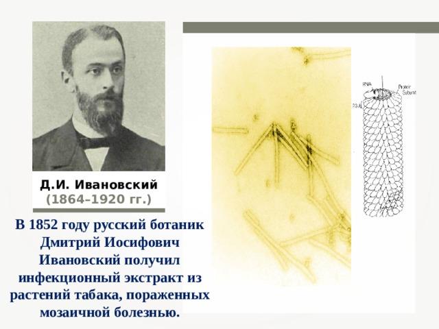 Д.И. Ивановский (1864–1920 гг.) В 1852 году русский ботаник Дмитрий Иосифович Ивановский получил инфекционный экстракт из растений табака, пораженных мозаичной болезнью.